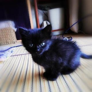 甘えたな黒猫のくうちゃんは優しさ飼い主様が決定しました。