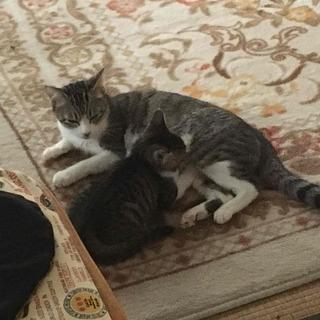 譲渡予定のすべての子猫の里親様が決まりました。ありがとうご…