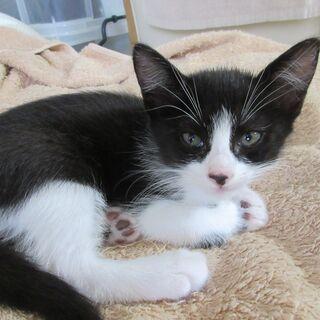 生後1か月の子猫の里親になってくれる方を探しております