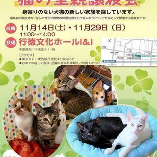 11/29(日) 猫の里親譲渡会/市川市 行徳