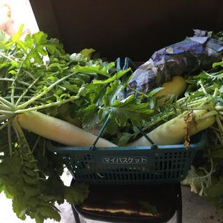 【11/29収穫予定】朝取り野菜等6点セット