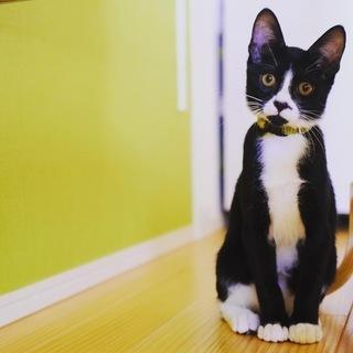 【トム】名探偵🕵️♂️必死でついて来た子猫ちゃん