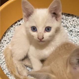 子猫の里親探してますの画像