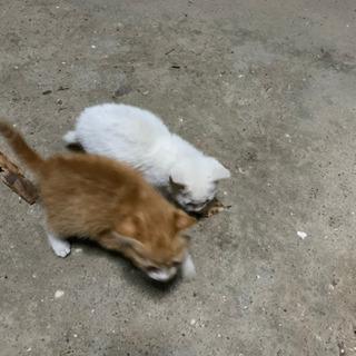 実家の庭に野良猫が産みました!