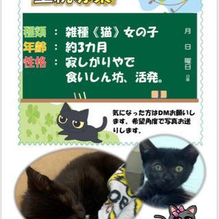 黒猫くろちゃん