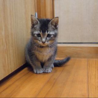 ヤンチャで甘えん坊な子猫です