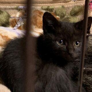 黒2匹、さび1匹、きじとら(むぎ?)2匹★子猫 2ヶ月くらい★5匹います★の画像