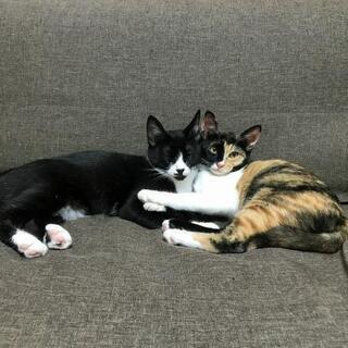 三毛猫子猫