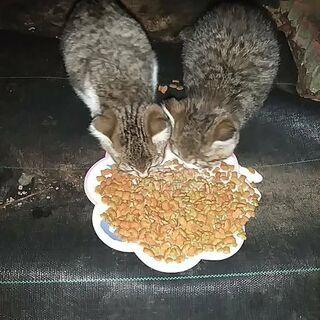 病院敷地内に捨てられた子猫(11月28日一旦締め切り)