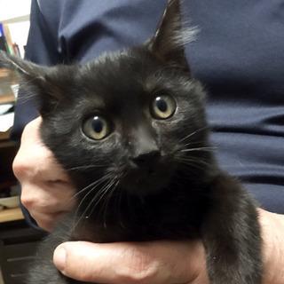 漆黒の穏やかな子猫