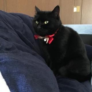 温厚なメス猫の飼い主さん募集(飼い主不在保健所にて確認済み)