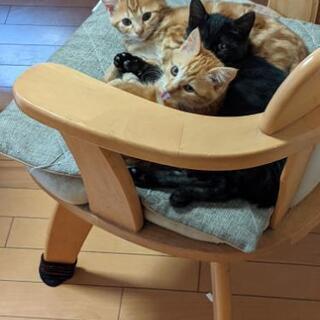 3ヶ月半の3匹兄妹&4ヶ月半のたま猫