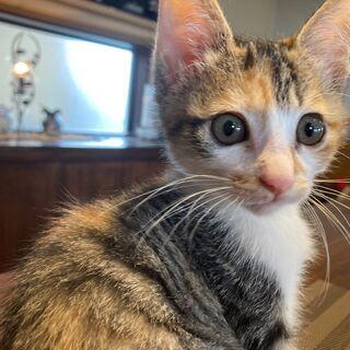 三毛猫キジ😻みんなのアイドル「みなみちゃん」