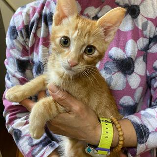 トラ猫くん(男の子) 生後約3ヶ月