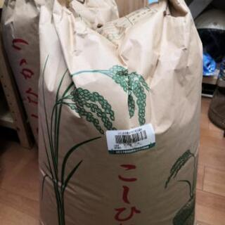 ラスト一袋! コシヒカリ 玄米30kg