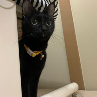 急募❗️東京都動物愛護センター引き出し🐱障害あり黒猫