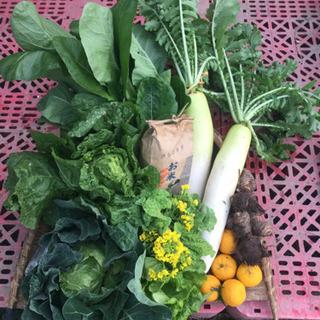 【12/1収穫】朝どり野菜と新米セット