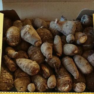 里芋 農薬不使用 約1kg