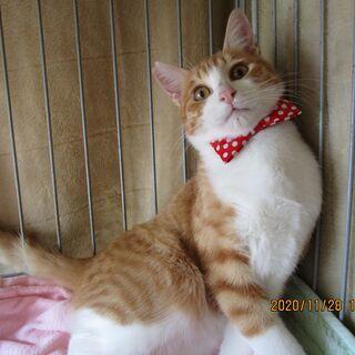 可愛い猫を幸せにしてあげましょう。里親さん募集中