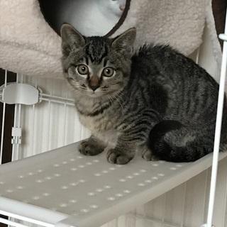 保護猫3兄弟生後2ヶ月