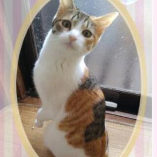 一歳くらいの幼猫 女の子 子猫