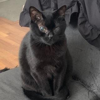 甘ったれの黒猫