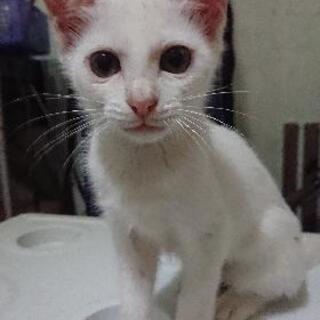 急募😺😺可愛い兄妹の保護子猫2匹里親さん募集🙇