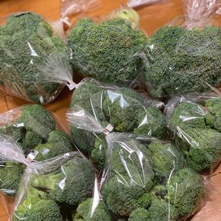 農家の冬野菜👩🌾