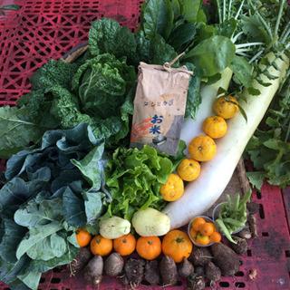 【12月6日収穫】季節の野菜と新米セット
