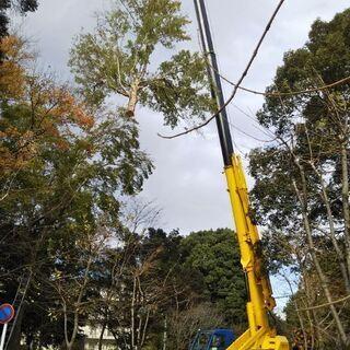 🌹 あらゆる樹木🌳 どんな場所でも 伐採引き受けます。     ...