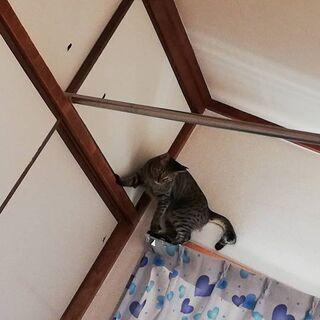 人懐っこいけど、ワケアリのキジトラの女のコ