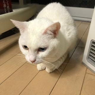 猫メス 人懐っこくて、撫でるとゴロゴロずーと言います!