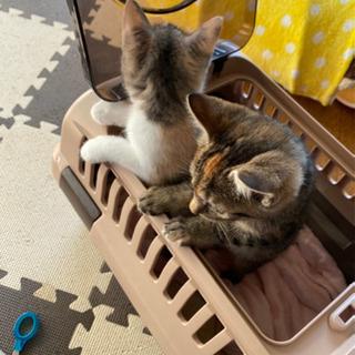 3匹の子猫たち