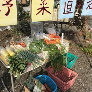 無農薬野菜 販売