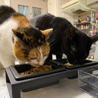 飼い主の容態が良くなく入院となり飼育困難な状況となってしまった為里親を募集いたします。 - 札幌市