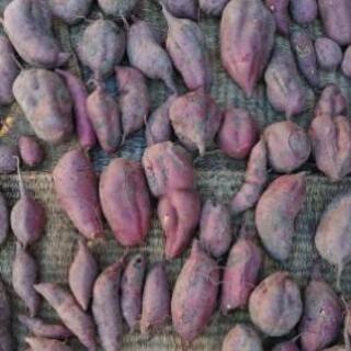 無農薬で自家栽培しました❗ 紅あずまです❗️