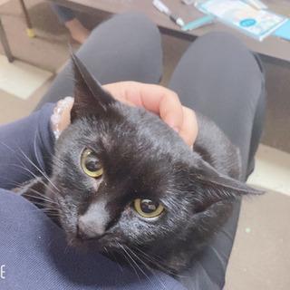 黒猫のルナちゃん