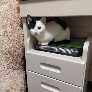 白黒、子猫4ヶ月ほど