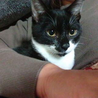 保護猫を迎えよう!生後4ヶ月。No.67くん!