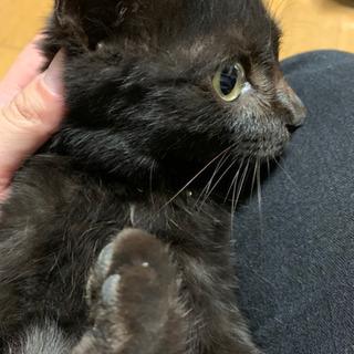 3ヶ月くらいの目がくりくり可愛い黒猫ちゃん