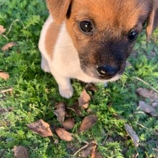 生後2ヶ月の仔犬です