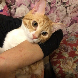生後4ヶ月の仔猫たちの里親を募集中です。