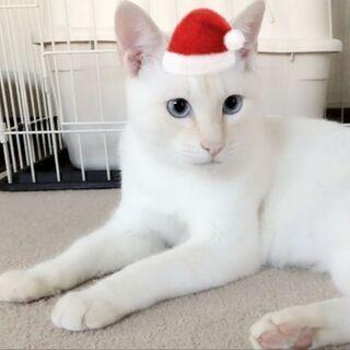 留守番 🆗お茶目な白猫君