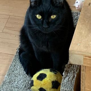 黒猫のディール君です。