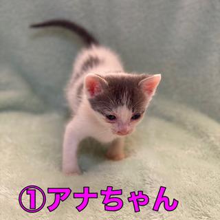 里親さん募集します。猫を家族の一員にどうですか?