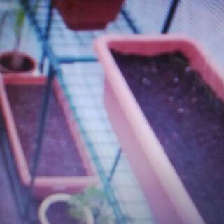 【神奈川・東京】土入り植木鉢&プランター処分&引き取り「横浜・川...