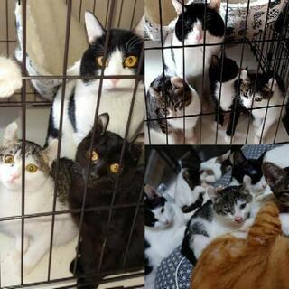 多飼崩壊の中、愛情を知らずに育った猫達を救ってください!