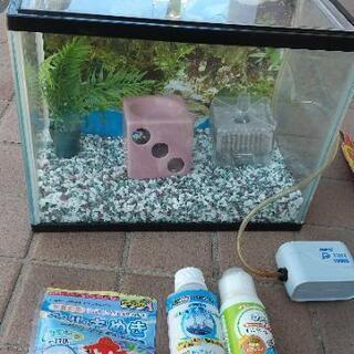美品!金魚のお部屋 s 水槽セット