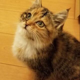 【里親決定】生後2ヶ月の子猫