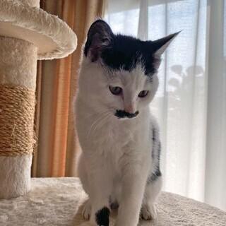 【急募!】保護ネコの里親を募集しております! No.2